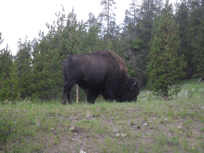 Yellowstone 149