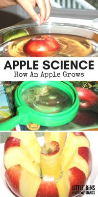 APPLE-SCIENCE_-How-An-Apple-Grows