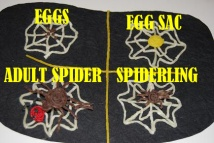 Spider-Life-Cycle-Craft